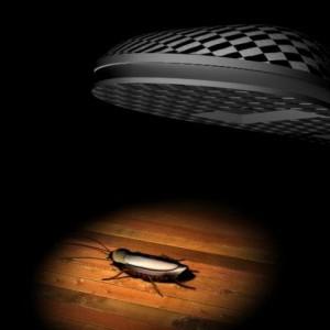 Чем потравить тараканов на кухне