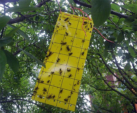 липучки от летающих насекомых