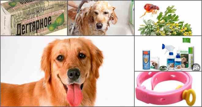 средства от блох у собак