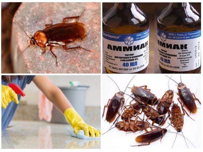 амиак от тараканов