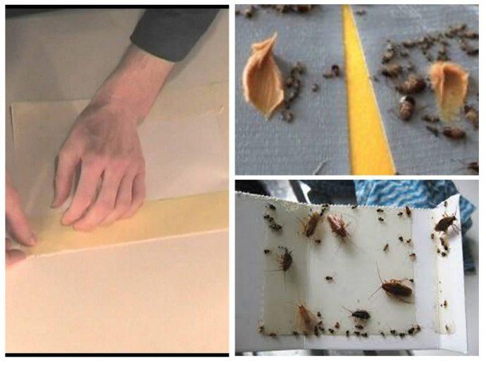 ловушка от тараканов самому