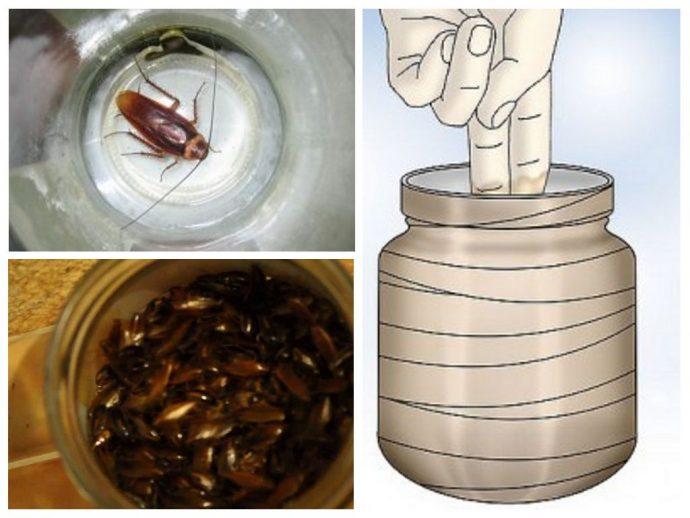 ловушка от тараканов своими руками