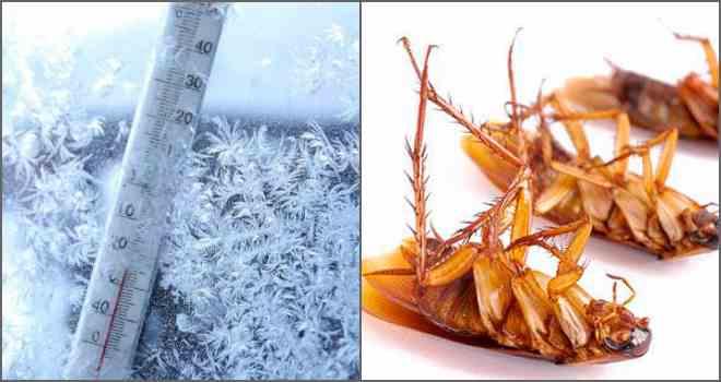 мороз от тараканов
