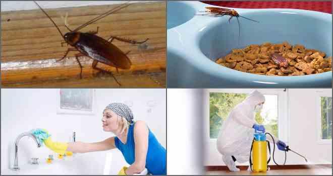 профилактика от тараканов